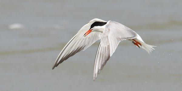 Help de visdiefjes vogels Terneuzen