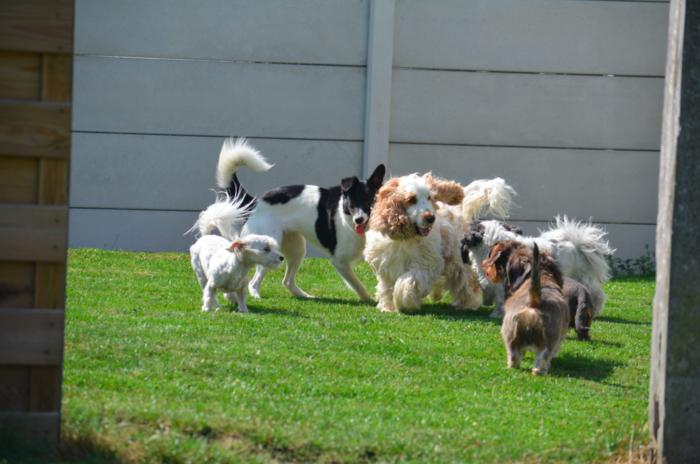 Van de Velde Sluiskil hondenschool trimsalon dierenpension