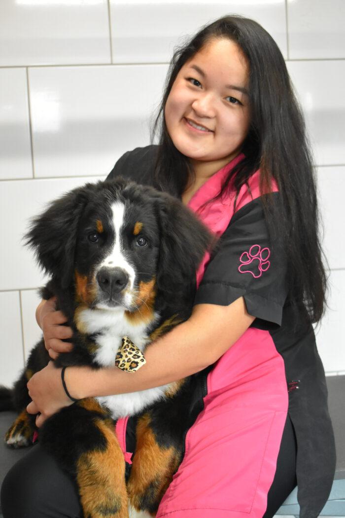 Van de Velde Sluiskil trimsalon dierenpension hondenschool