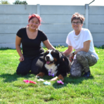 Van de Velde dierenpension trimsalon hondenschool sluiskil
