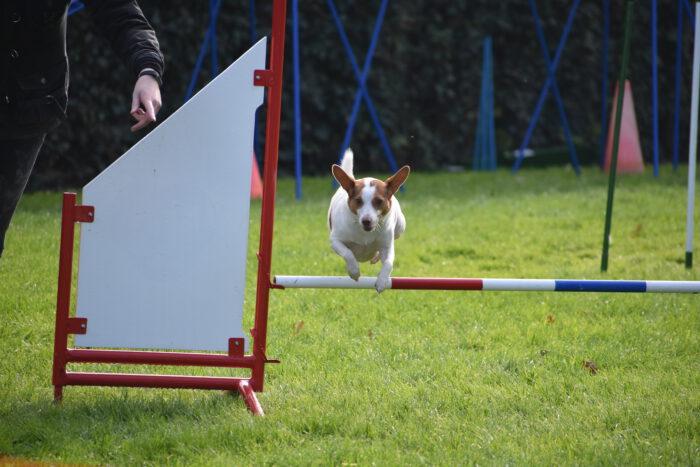 Van de Velde hondenschool dierenpension trimsalon Sluiskil